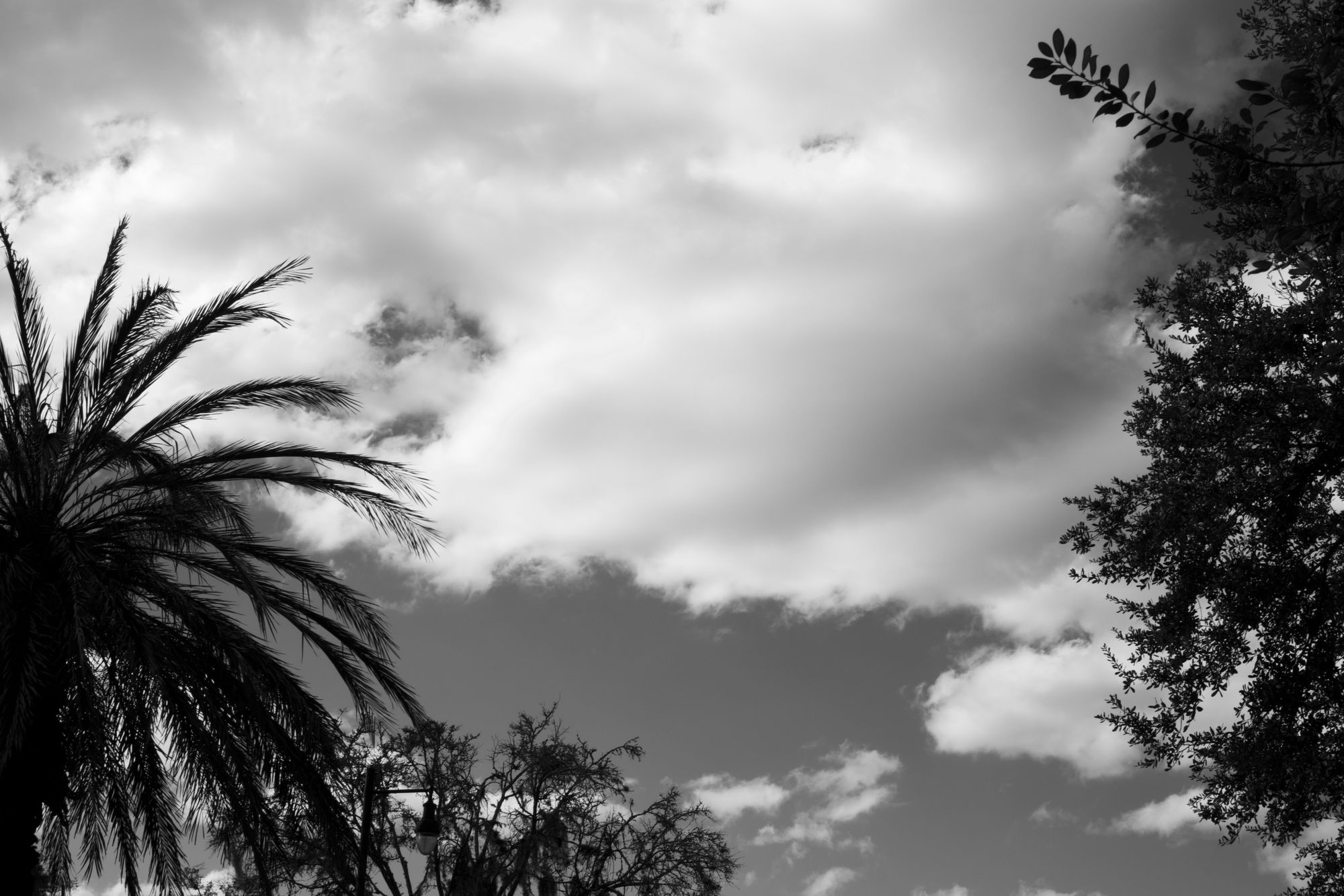Various treetops in front of a cloudy sky