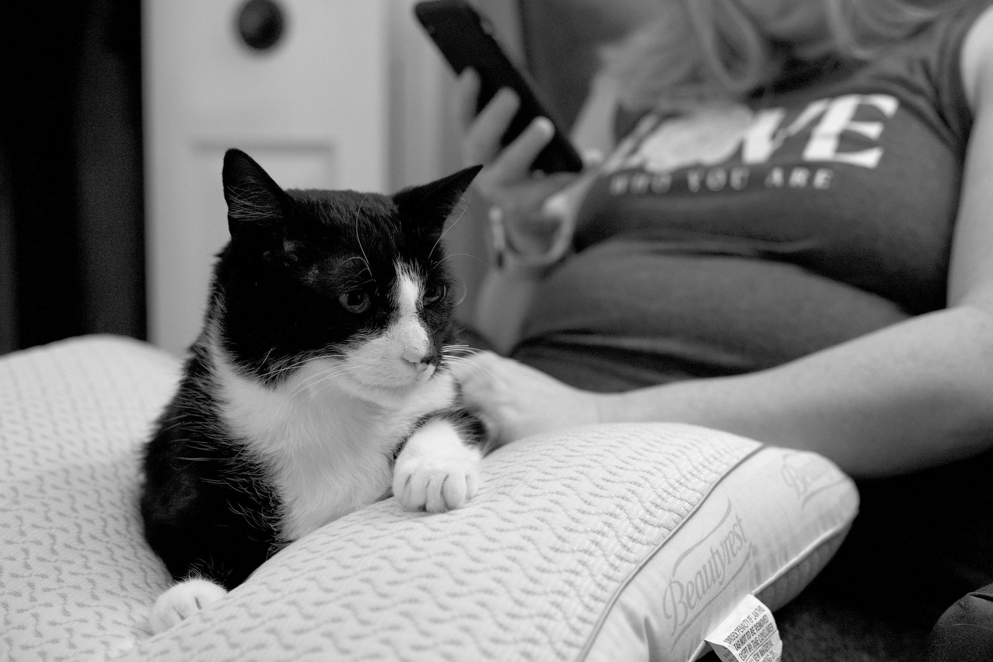 Tuxedo cat laying on a pillow on a woman's lap